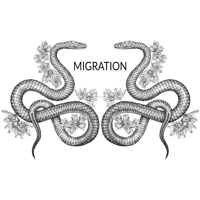 migrationsnakes_lykanthea_Velvit_3.jpg