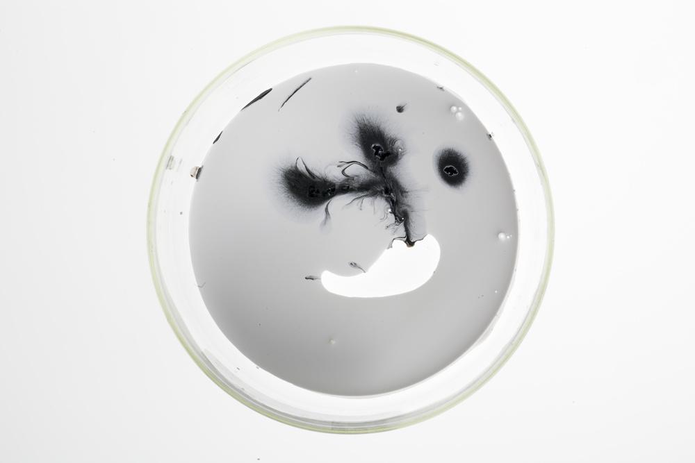 Petri Dish series 7.jpg