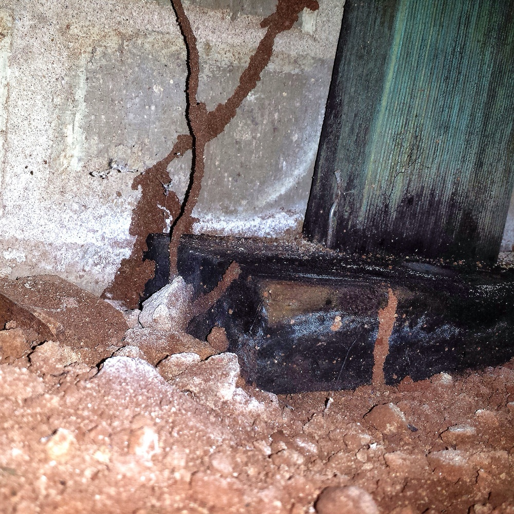 Treated pine framing used in a subfloor being eaten by termites.