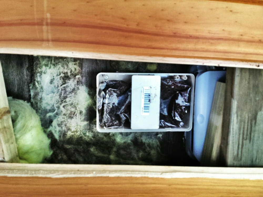 The Termites were subsequently baited, you can see here the cavity and the insulation on the side of the bait box.