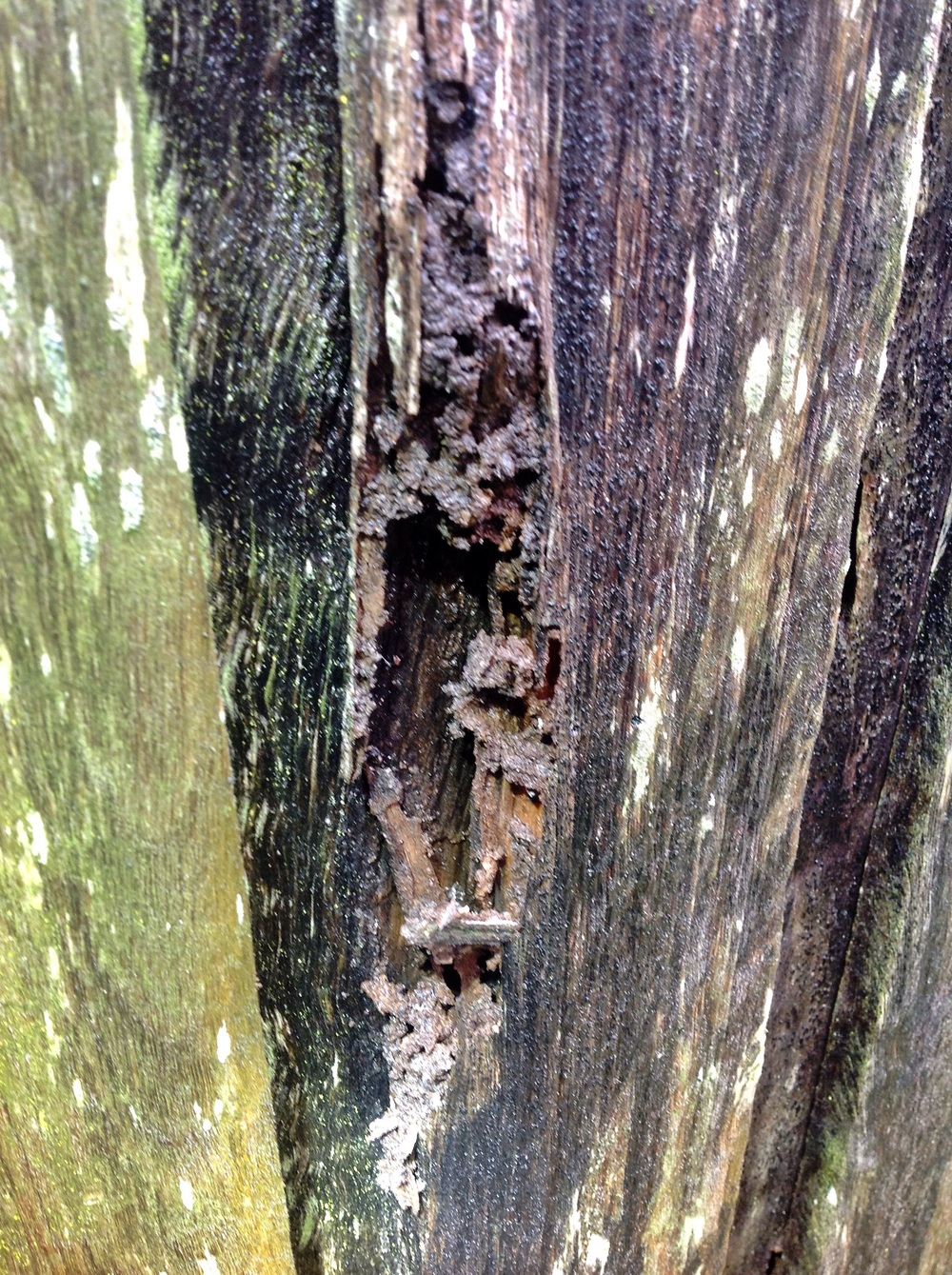 If you see damage like this, chances are you have termites feasting on your fences!