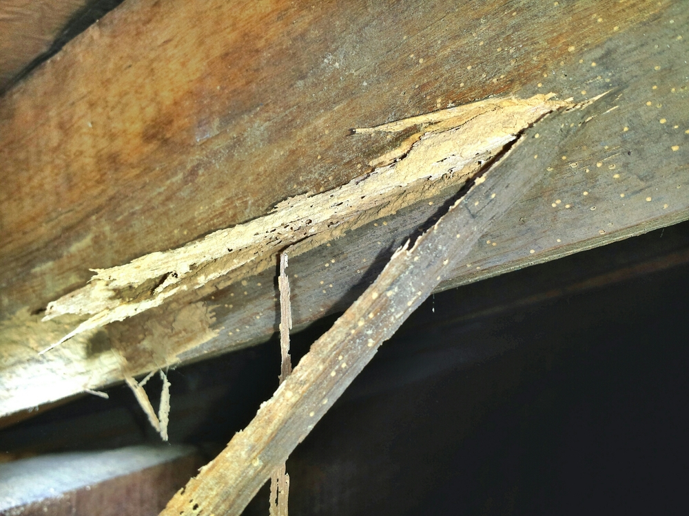 This damage was found in a roof void during a termite inspection.