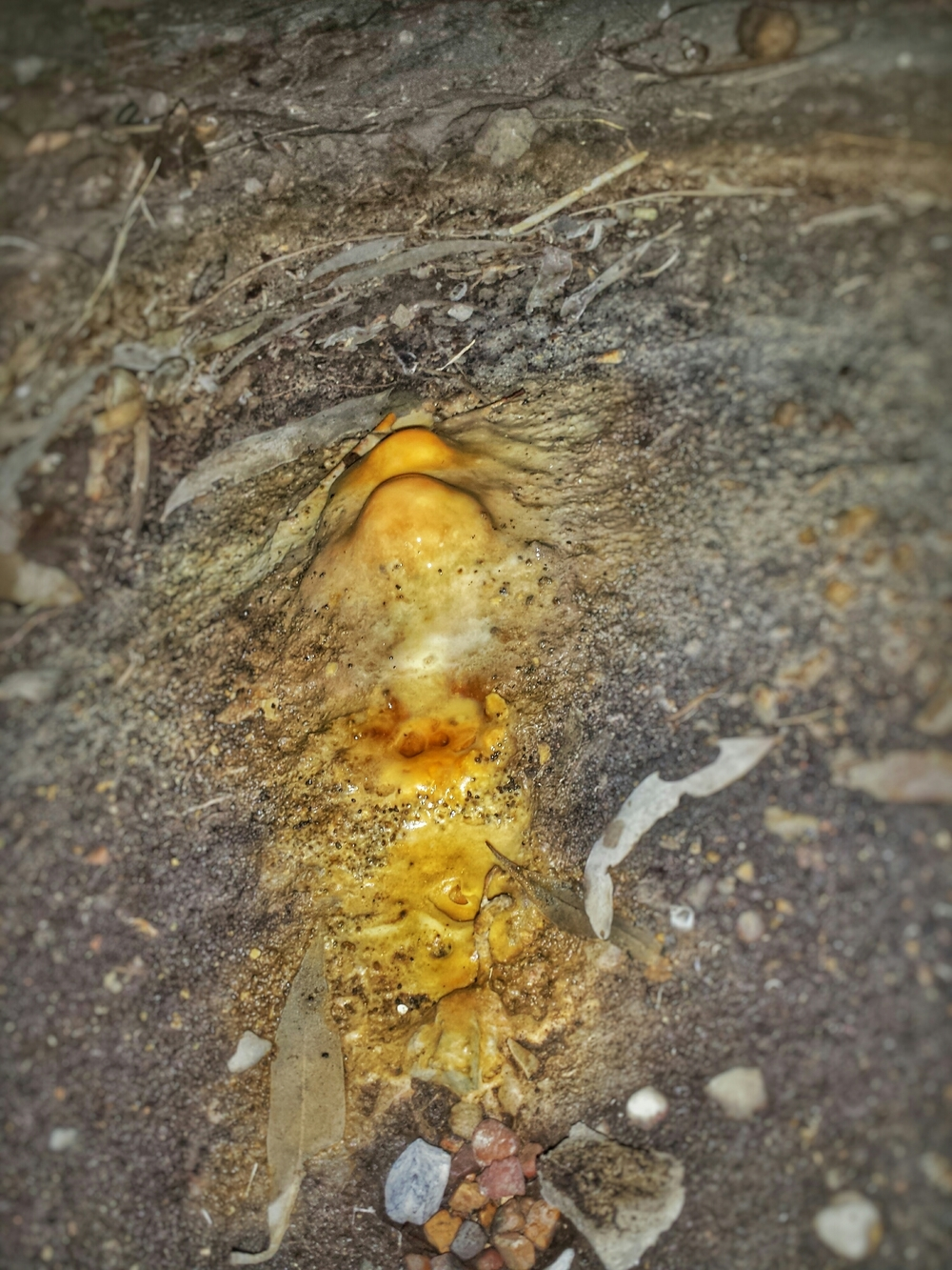 The Stalagmites were a sure sign of the extent of this leak. Many thousands of litres of water would have been dripped to form this huge calcified deposit. It was so extensive that we couldn't budge it!