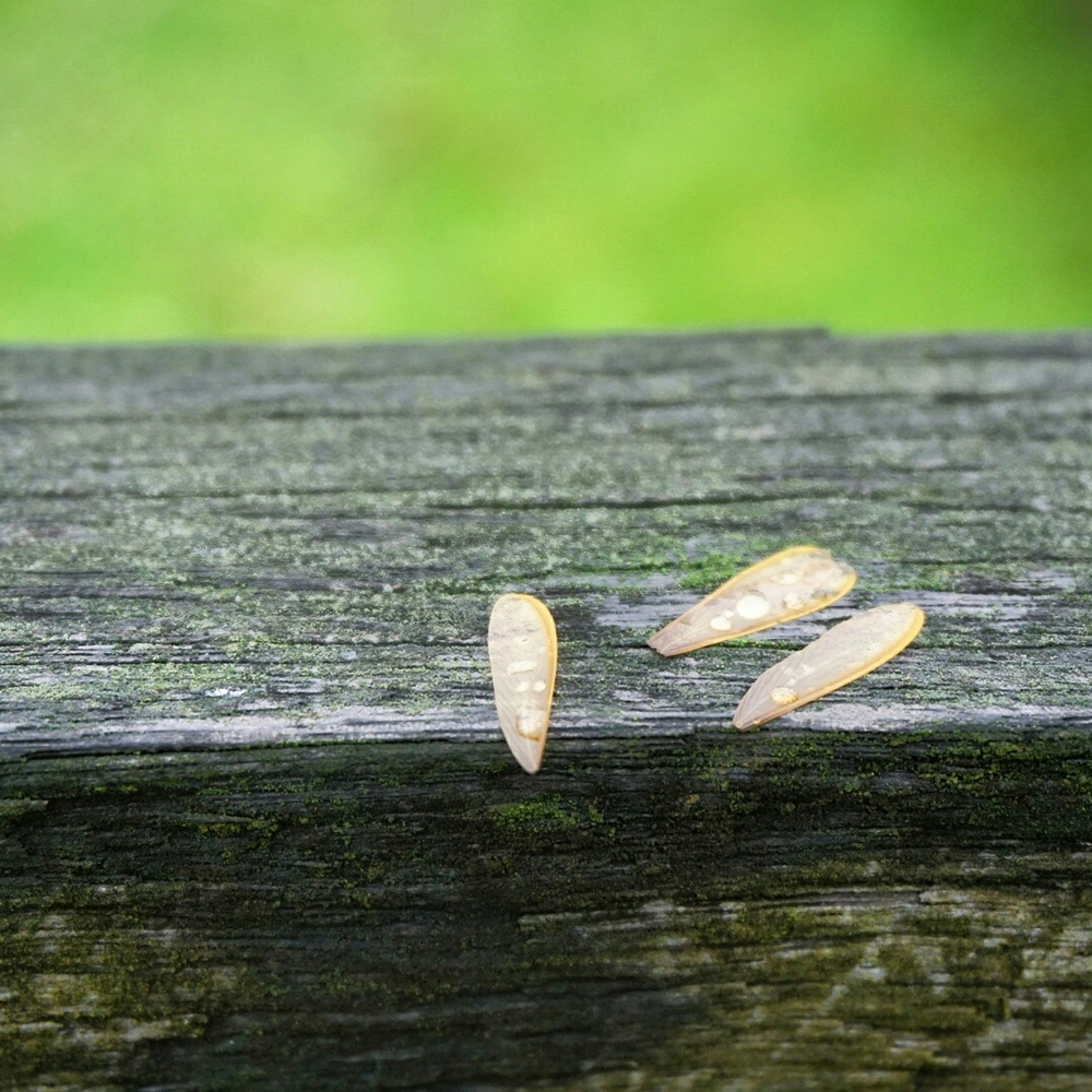 Wings | Termite Infestation Signs A Homesteader's Basic Guide