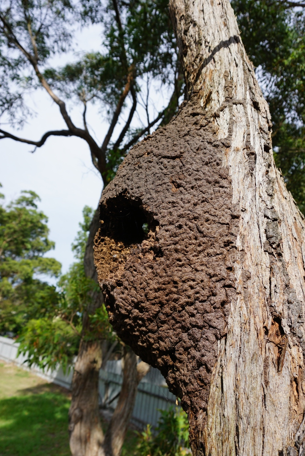 Smashing up a termite nest like this one will control this colony, most of the time. So long as there aren't other colonies or a sub nest, depending on the variety of termite.