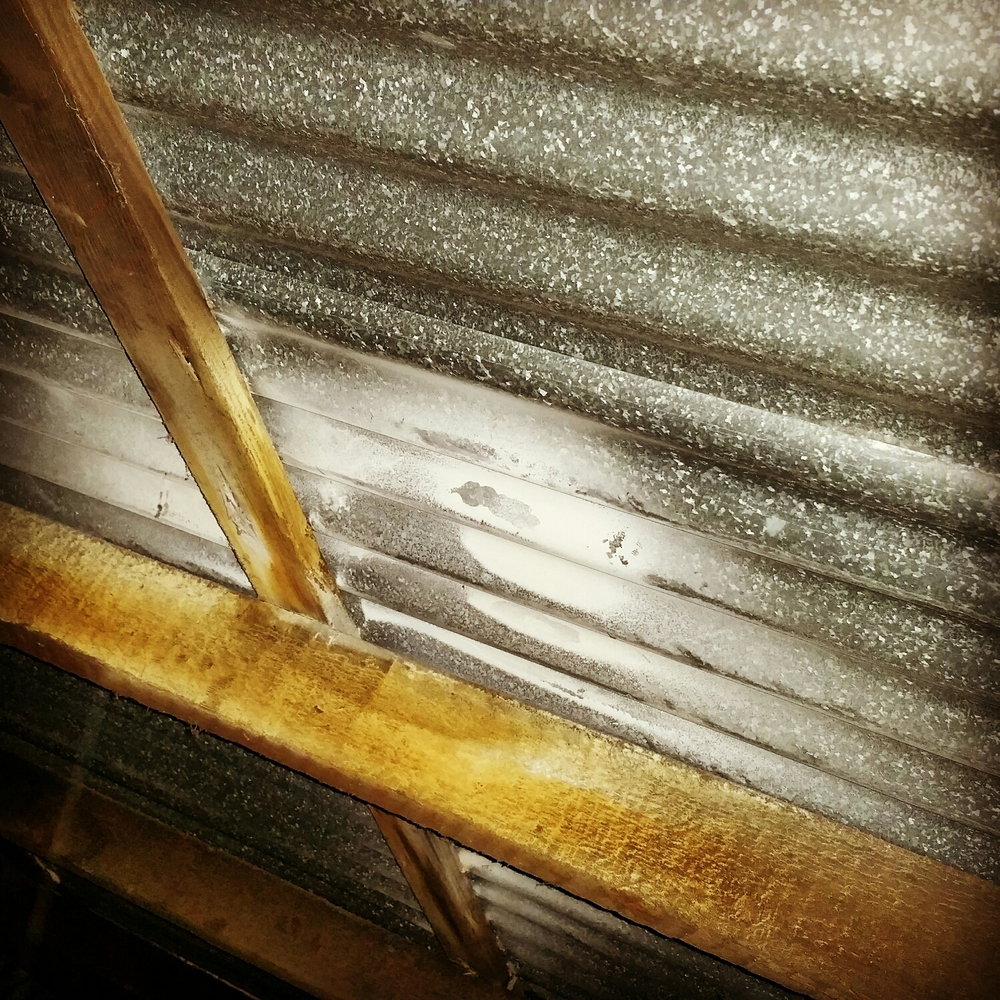 The dust was shot into the roof in one location and has coated the roof iron, not the intended location for insecticidal dust!