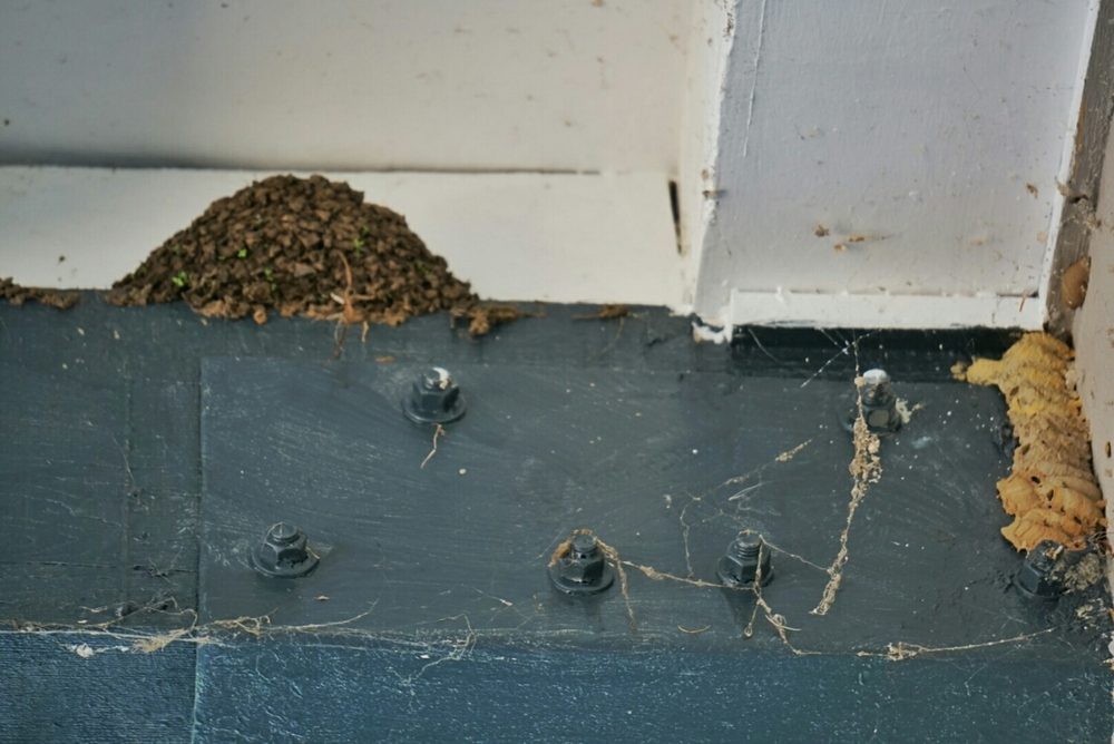 These are often confused for termites. A birds nest on the left and some wasps nests on the right.