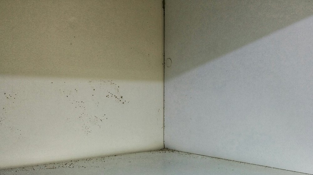 Inside this built in wardrobe you can see evidence of termite workings. There is a tiny bit of mud right in the middle of the corner at the top and spots of mud/mould is visible on the Left Hand side. This is a clear indication of termite activity behind the walls.