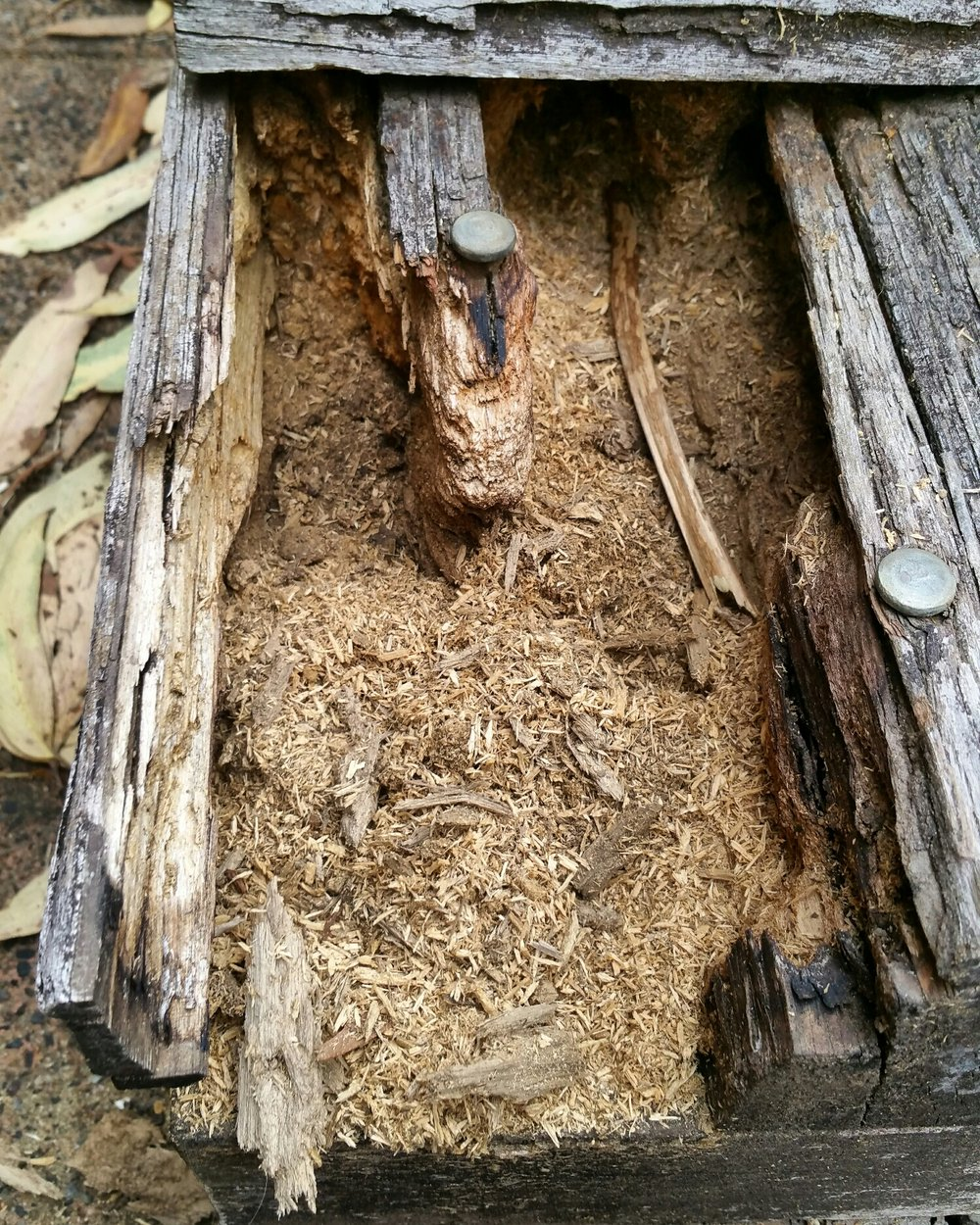 The small shavings of timber are a giveaway that termites didn't eat this. Fungal decay coupled with ants were the culprit.