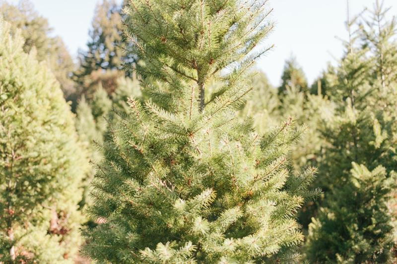 0184_MegPerotti_tree