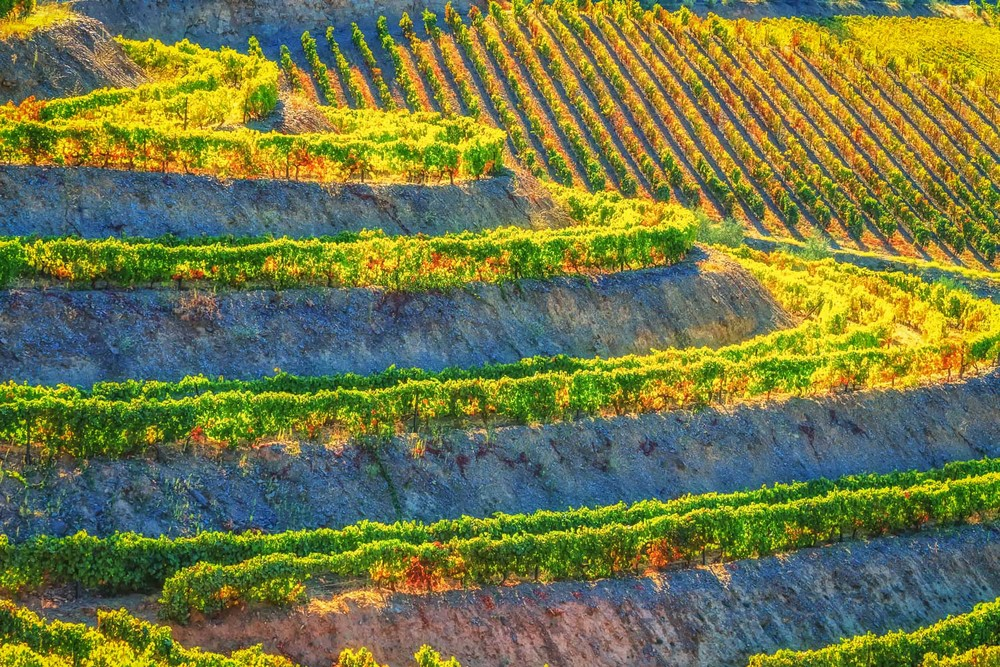 Vineyard Terraces