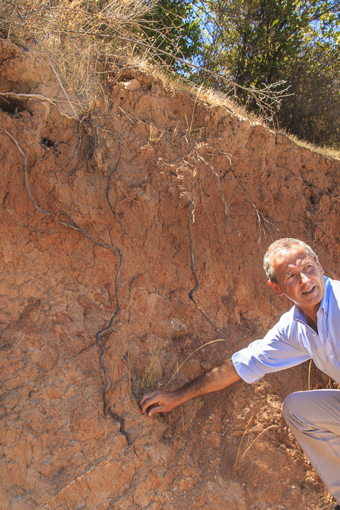 Vines pushing deep into the soil of Chile's Apalta with Carlos Serano of Vina Montes