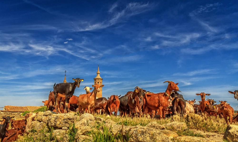 Goya, Goats and Garnacha