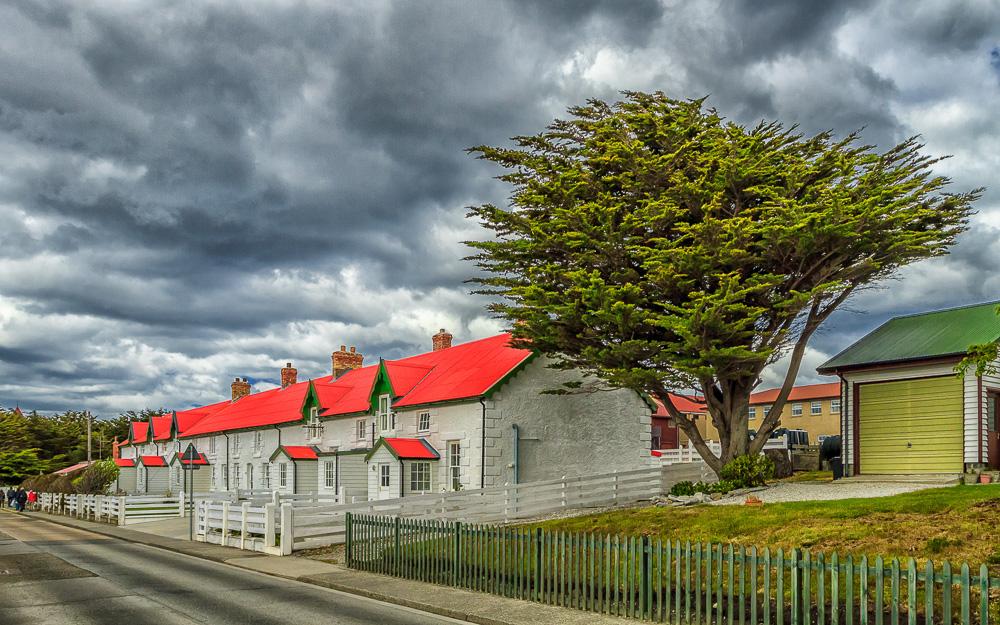 Falkland Tree