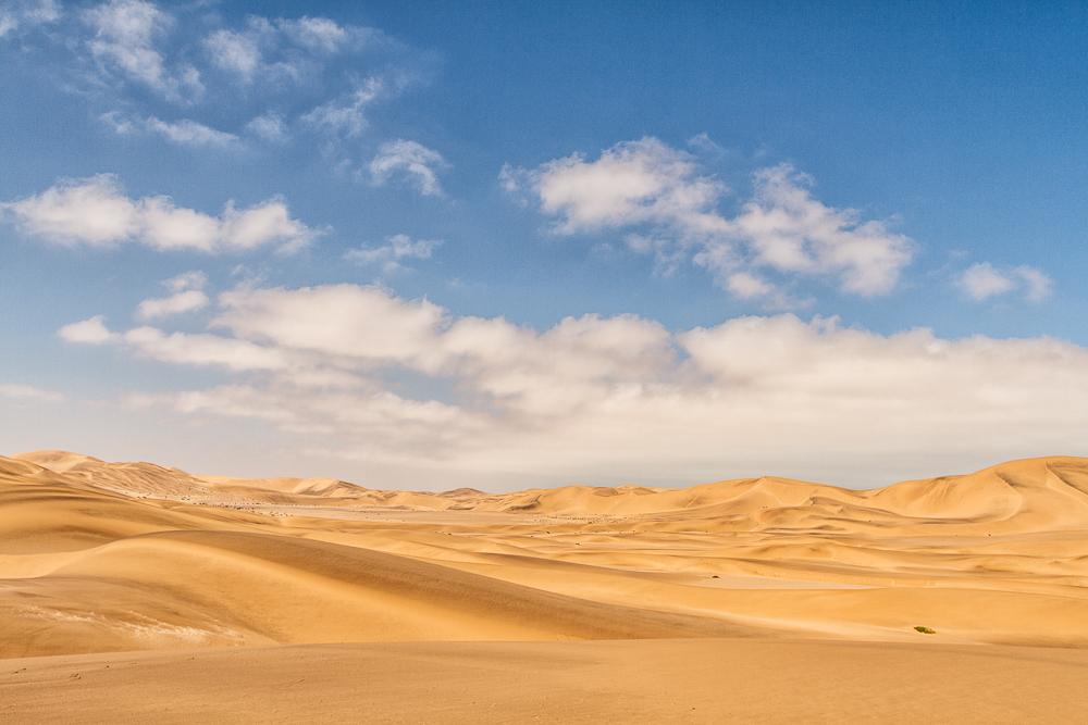 Dunes in Contrast