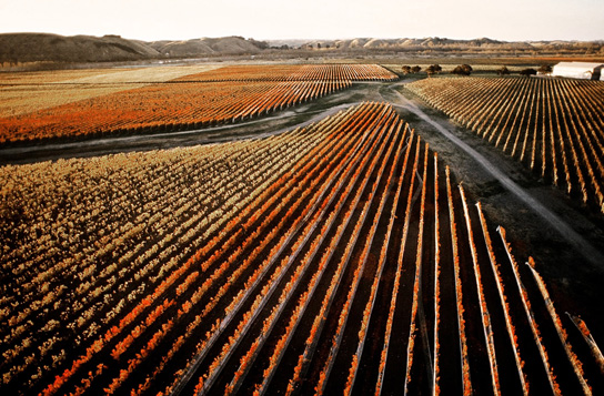 Gimblett Gravels Vineyard in Autumn