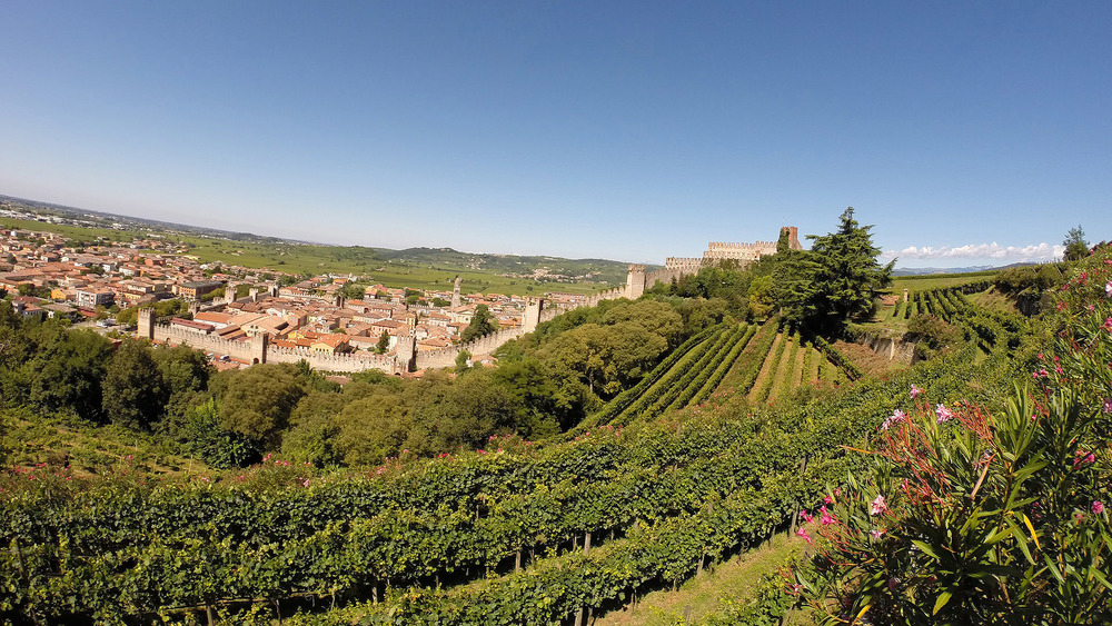 Pieropan's La Rocca vineyard with the town of Soave in the background (photo: Pieropan)
