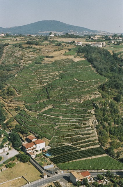 Guigal's Le Colombier Vineyard in Condrieu (Photo: Guigal)