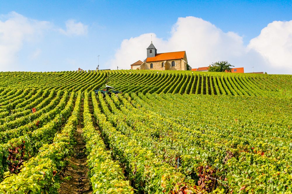 Roederer's vineyard in Mareuil sur Aÿ