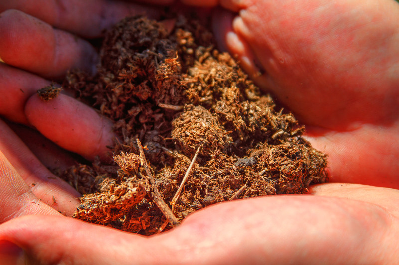Compost plays a crucial role in the nutrition and balance of a biodynamic vineyard