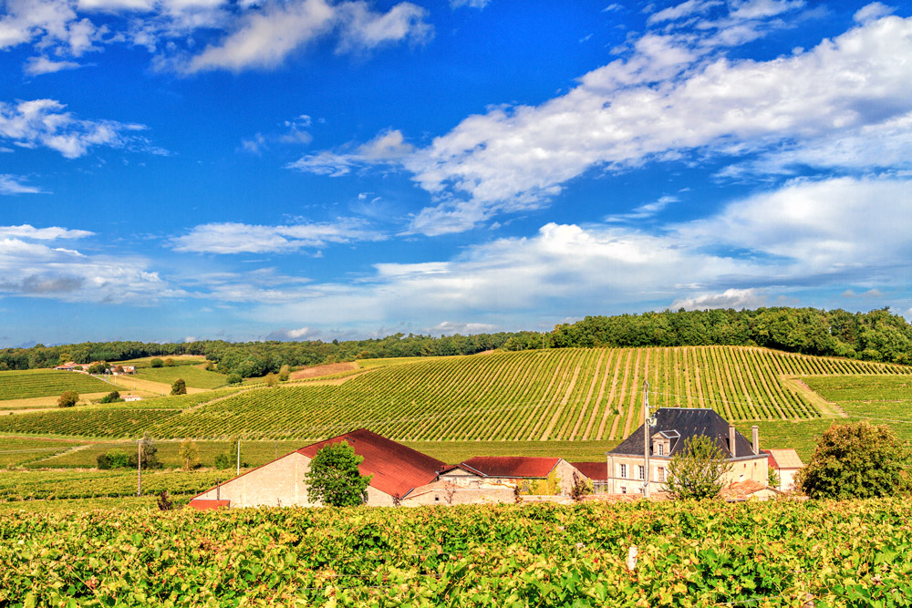 Cognac's rolling hills  (Photo Lyn Farmer)