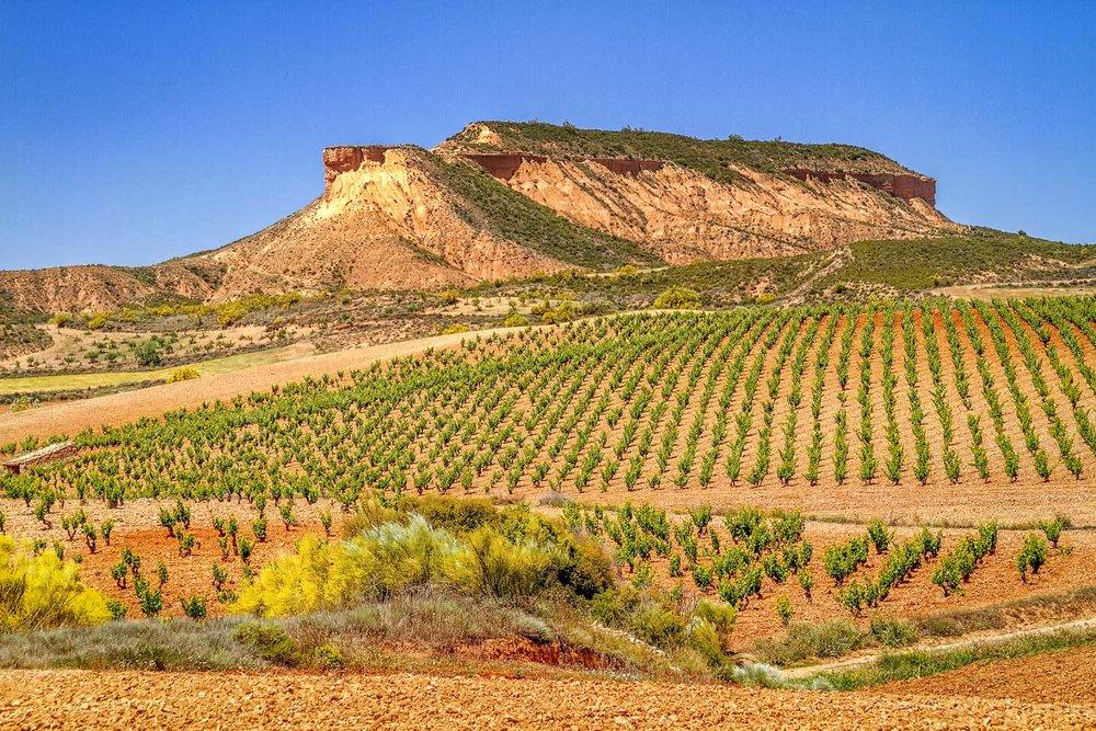 The arid vineyards of Cariñena, Spain (Photo: Lyn Farmer)