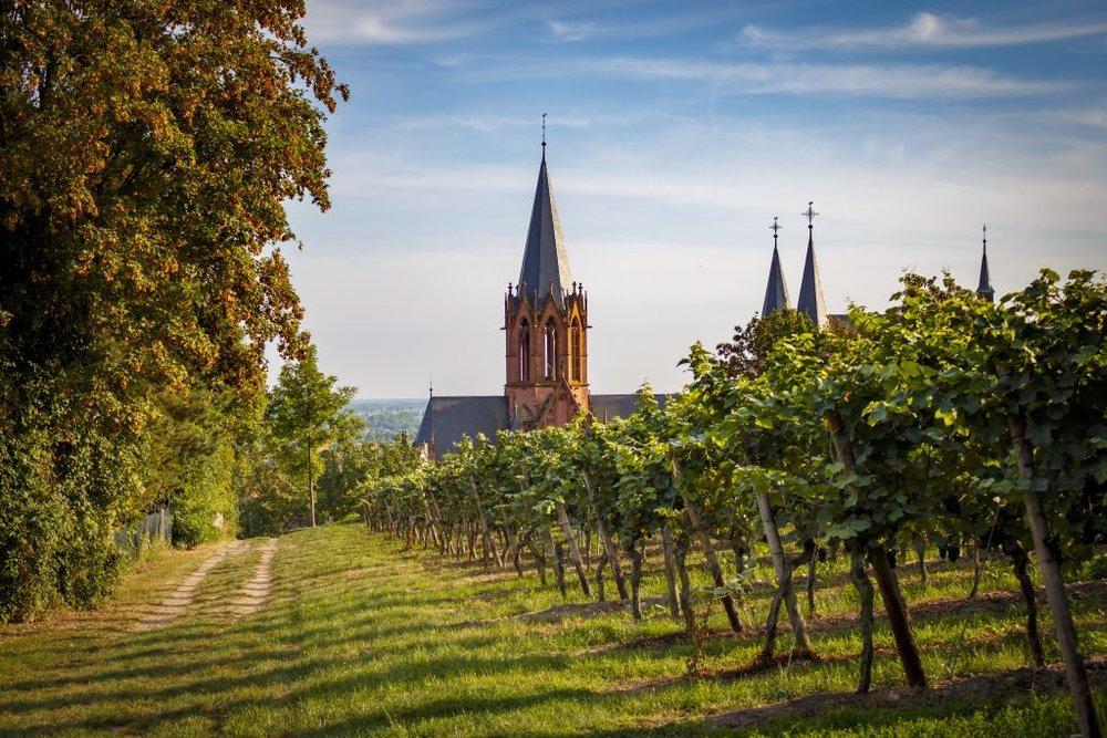 Vineyards in Rhinehessen (Photo: Wines of Germany)