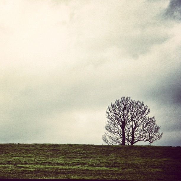 #nature #nola #mardigras #travel #simplistic #gloomy #canon