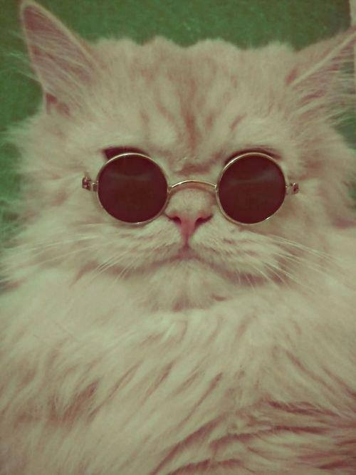 A cat with sunglasses is ALWAYS funny…. Gets me errry time. Wear Art. Support Artists. Meow. ArtfulVenture.tumblr.com