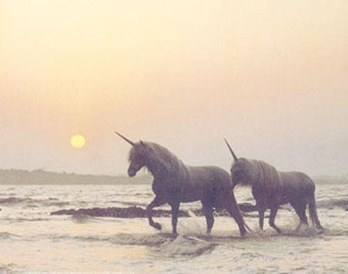 My little pony. Follow for Fashion+Indie+Art+Wanderlust
