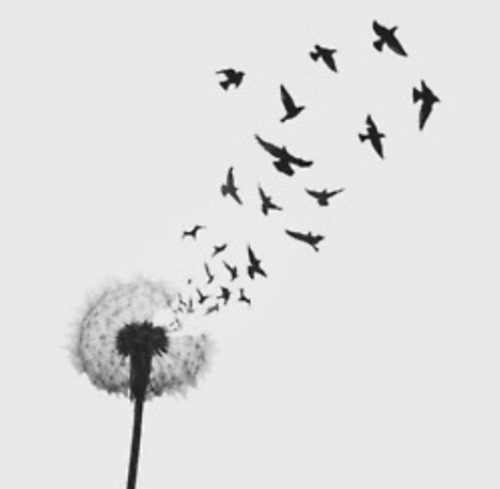 make a wish and fly away. follow for Fashion+Indie+Art+Wanderlust
