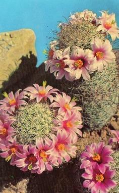 Happy Cacti.