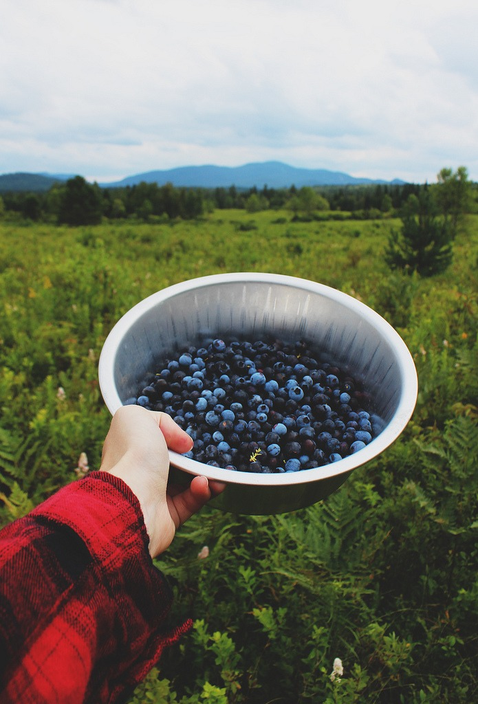 thelongkissgoodnight: Blueberry picking (by Emily Boyer Photography)