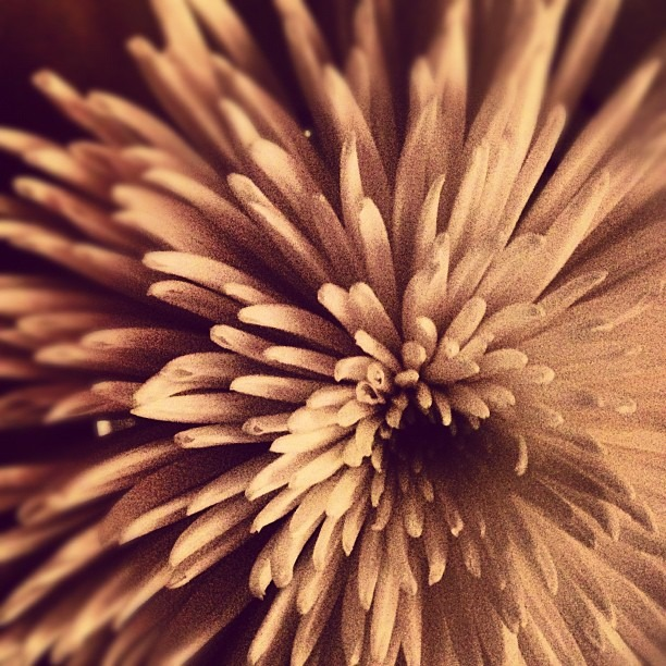 #flower #dinner #geometric #abstract #texture #sepia