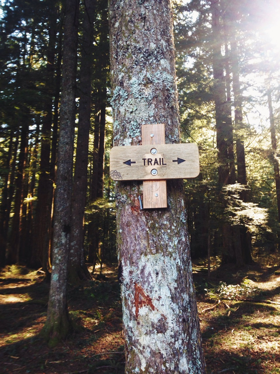Follow the trail.