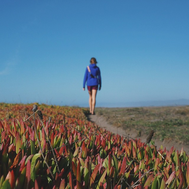 Exploring the Northern California bluffs with a side of succulents. #myartfulventure
