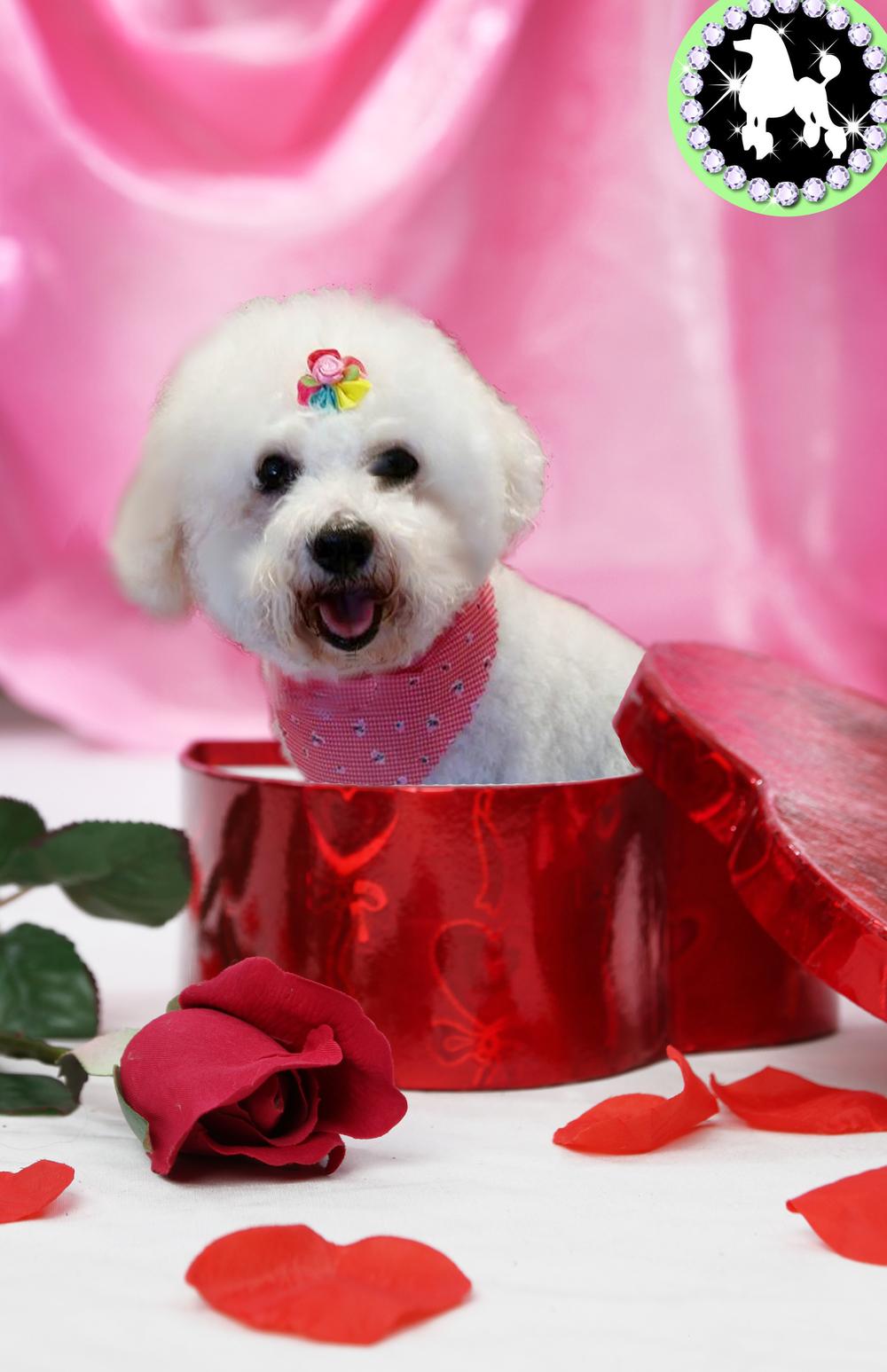 belle valentine.jpg
