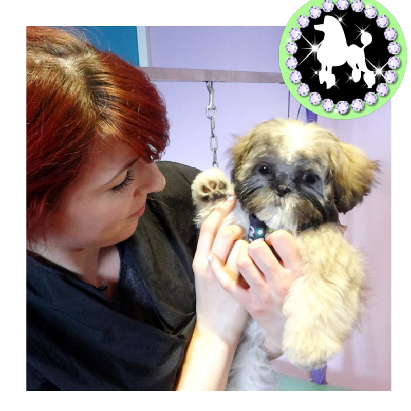 Mutley Makeovers Dog Grooming Tamworth