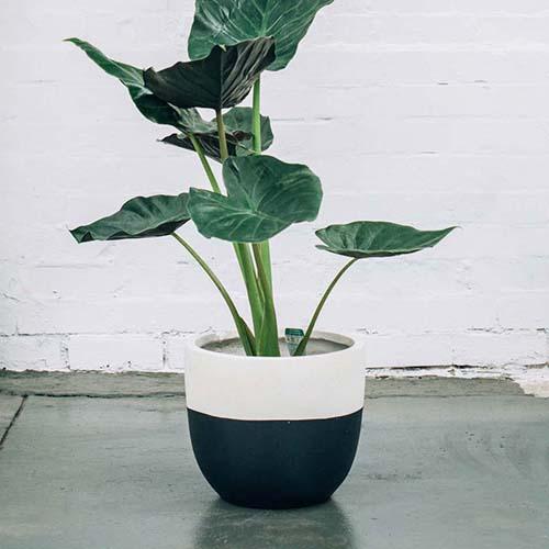 pot-designer