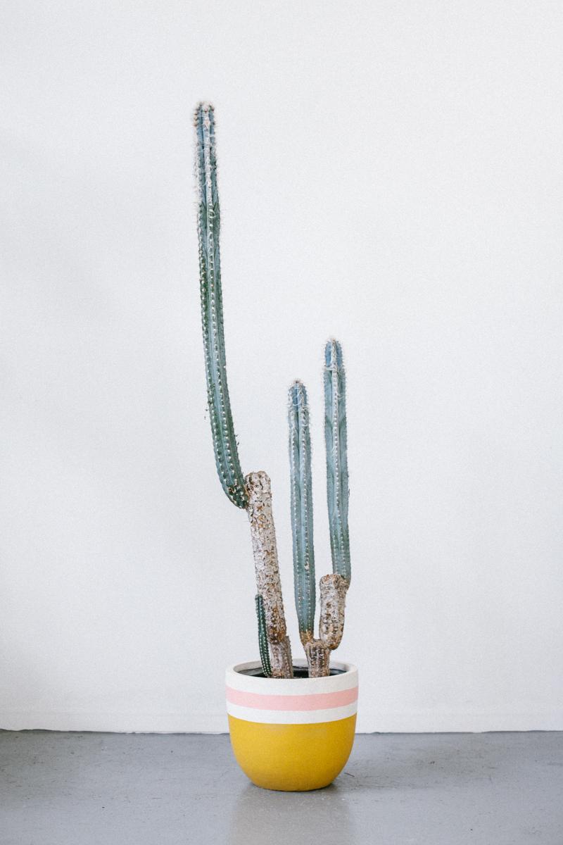 designer-hand-painted-pots
