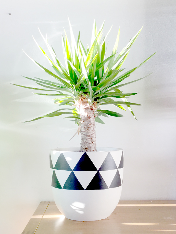 designer-pots