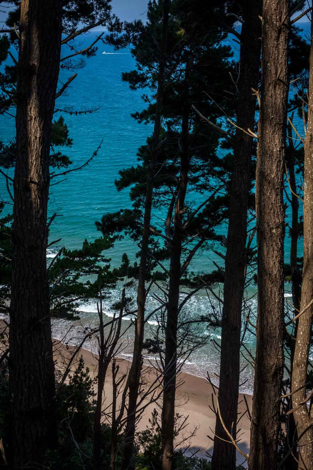 Beach View Through Trees