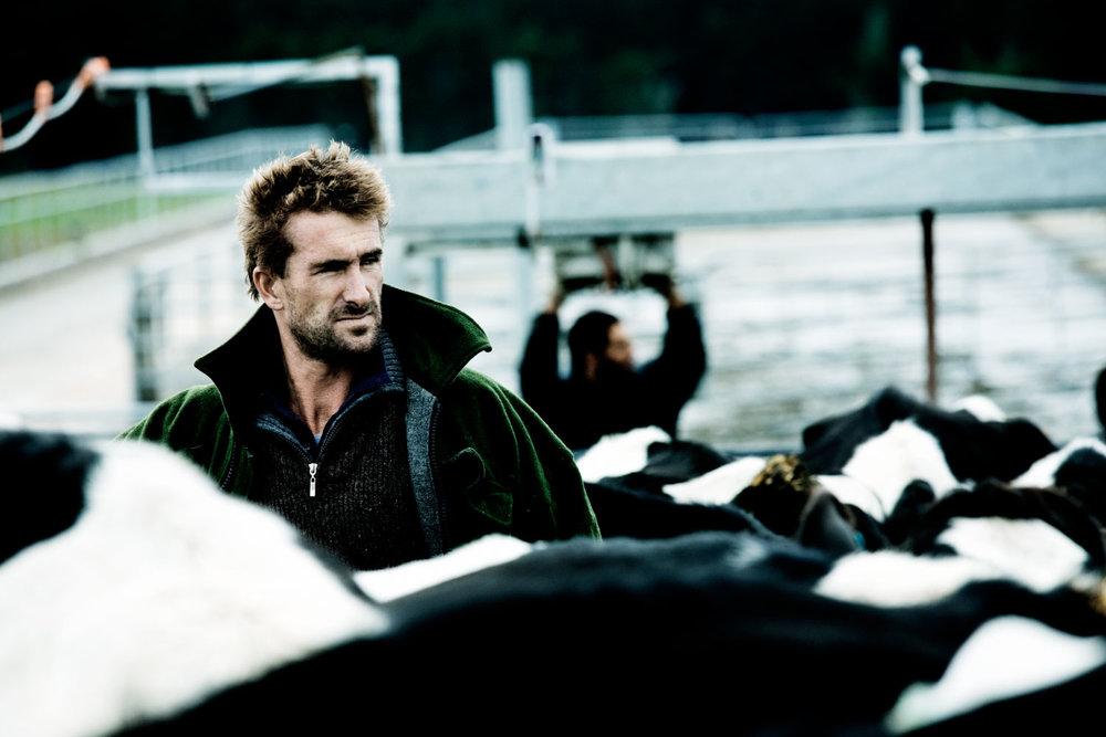Farmer On A Dairy Farm