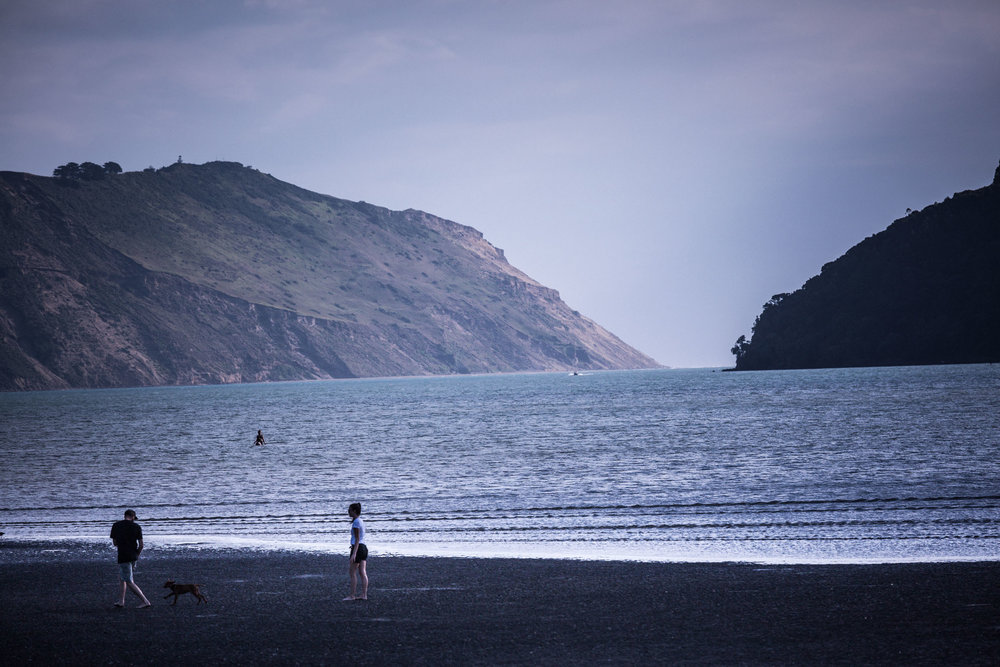 couple play with dog on harbour beach-whatipu-waitakere-ranges-auckland-new zealand-spid pye_B6C6768.jpg