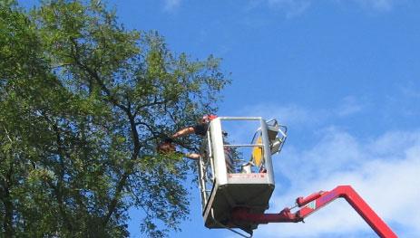 Vedligeholdelse Vi tilbyder almindelig vedligeholdelse af private og offentlige områder. Læs mere →