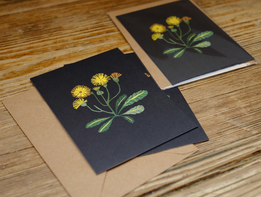 I have been working on some new product which I'm very excited about, all based on plant studies.  Dandelion Postcard  pictured here can be bought along with my postcard sets and new  Plant Study Print  A3 size below. Please feel free to email me on the contact page if you are interested in purchasing any postcards or prints.