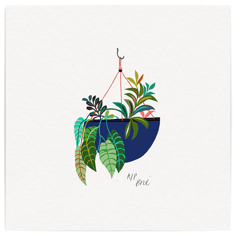 Hanging Spiderplant Giclée Print on Archival Paper Edition of 40, signed 20 x 20cm Unframed   Edition sold   £34   © Brie Harrison 2016