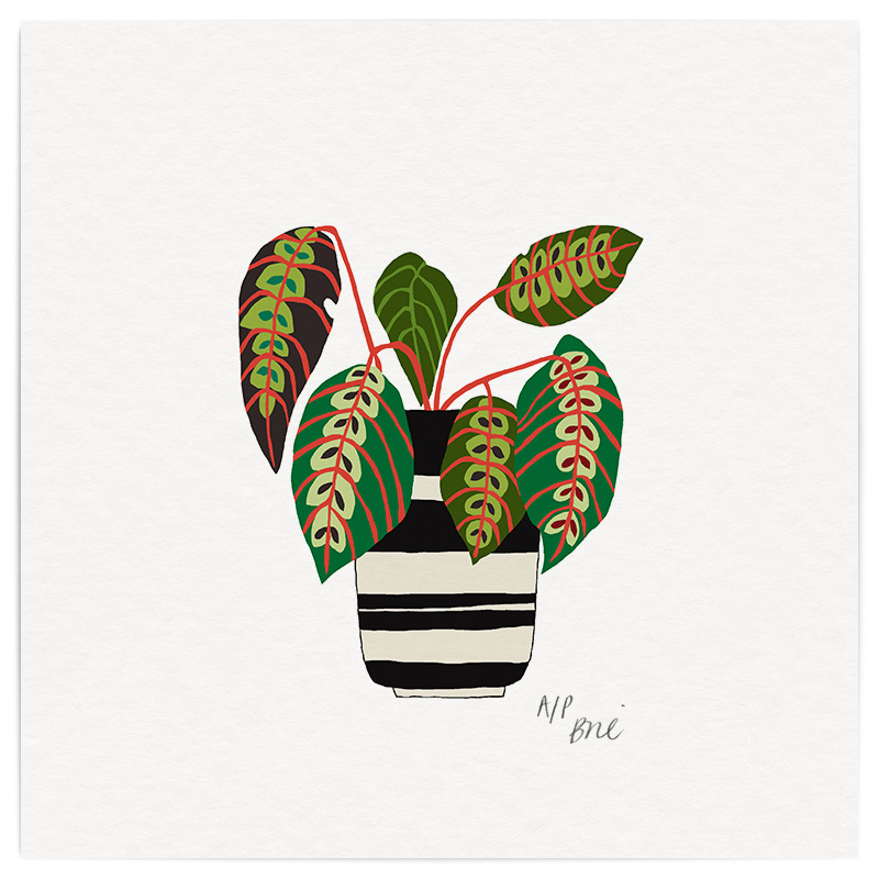Stripe Potplant Giclée Print on Archival Paper Edition of 40, signed 20 x 20cm Unframed  £34   © Brie Harrison 2016