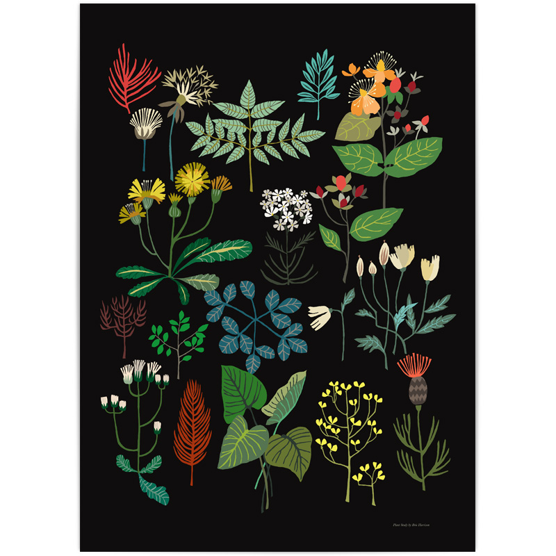Plant Study Print 200gsm omnia white paper A3 Size Unframed  £ 24   © Brie Harrison 2016
