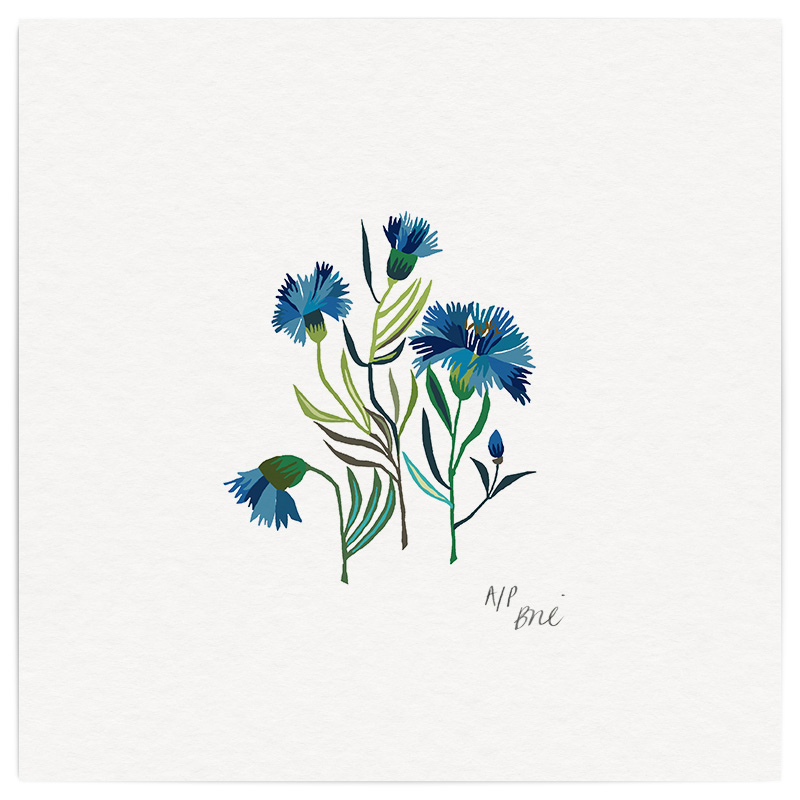 Cornflowers Giclée Print on Archival Paper Edition of 40, signed 20 x 20cm Unframed  £34   © Brie Harrison 2016